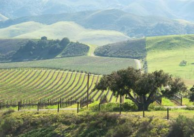 Paso-Robles-vineyard-in-spring
